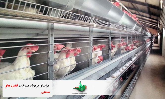 مزایای پرورش مرغ در قفس های صنعتی