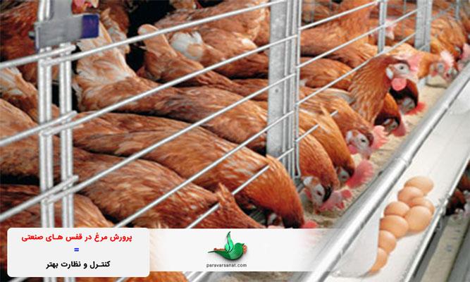 پرورش مرغ در قفس