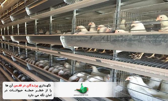 نگهداری پرندگان با قفس