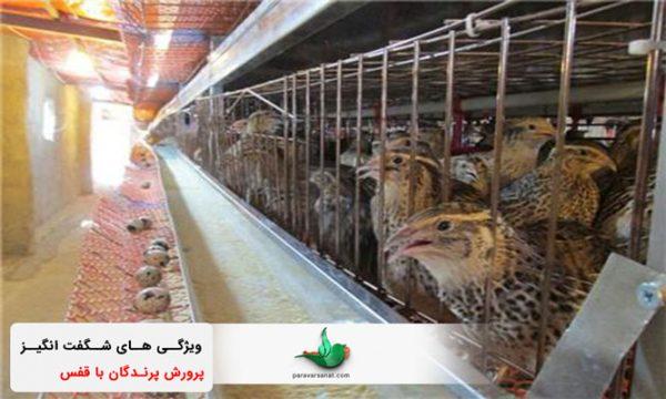 پرورش پرندگان در قفس