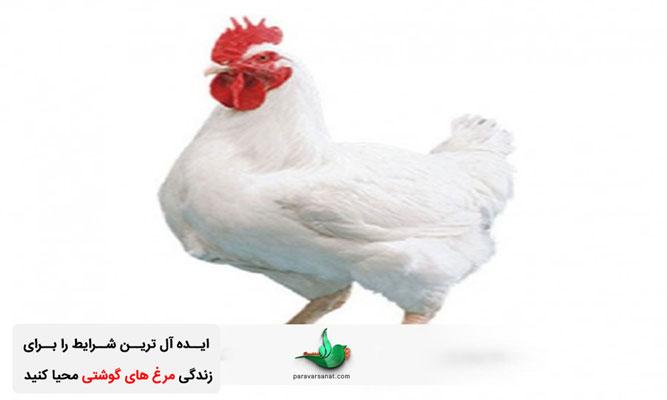 محل پرورش مرغ گوشتی