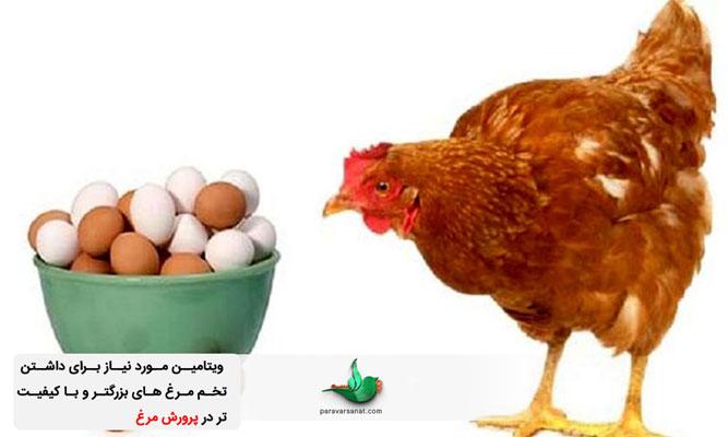 ویتامین مورد نیاز مرغ