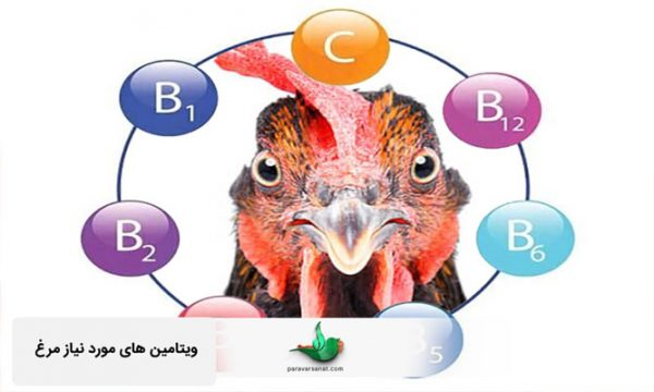 ویتامین های مورد نیاز مرغ