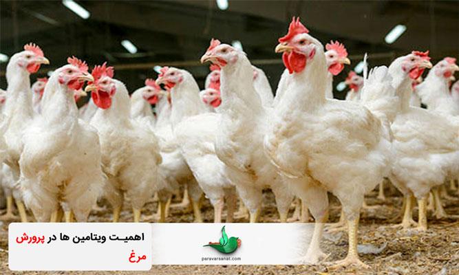 ویتامین ها در پرورش مرغ