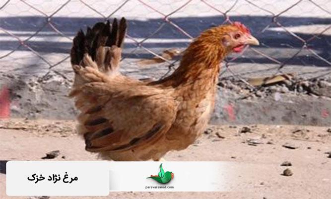 مرغ خزک